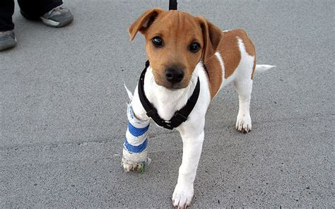 puppy pals cast puppy cast n tiny