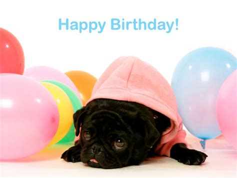 happy birthday pug top happy birthday pug images for tattoos