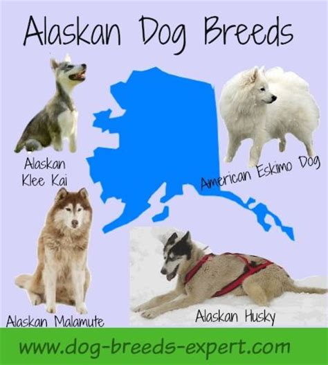 alaskan breeds breeds low shedding breeds picture