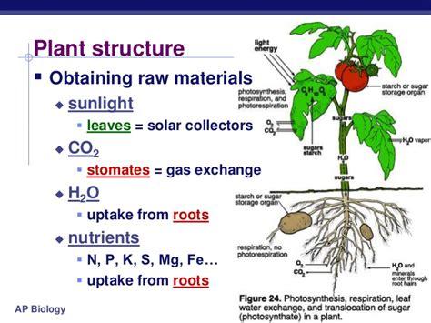 Solar Cross Light - chapter 10 photosynthesis