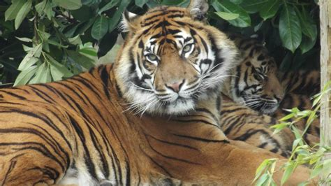 discount vouchers for uk zoos chester zoo mini break from just 163 30 50pp school holiday