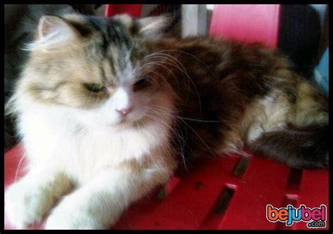 Sho Pembasmi Kutu Kucing informasi seputar dunia hewan