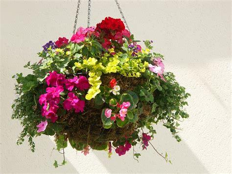 best indoor hanging plants indoor hanging plants largelarge size of divine ideas