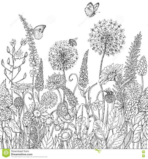 butterfly meadow coloring pages seamless line pattern with wildflowers and insects stock