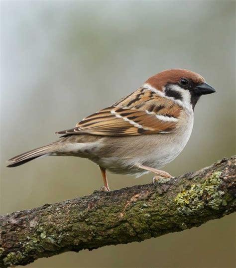 uccelli da giardino uccelli liberi da giardino