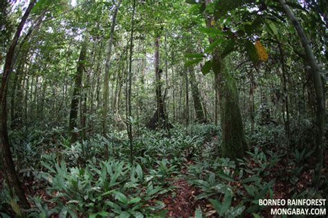 Plants In The Tropical Rain Forest - rainforest shrubs
