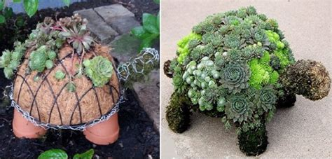 how to make a succulent turtle how to make a succulent turtle home design garden