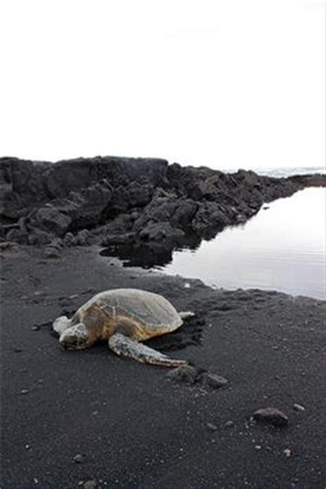 black sand beach big island wander wonder pinterest black sand beach big island sometime you ll see a honu