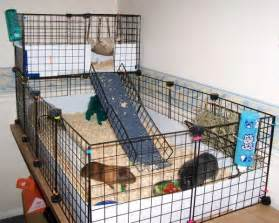 Guinea Pig Hutch Size About Guinea Pigs