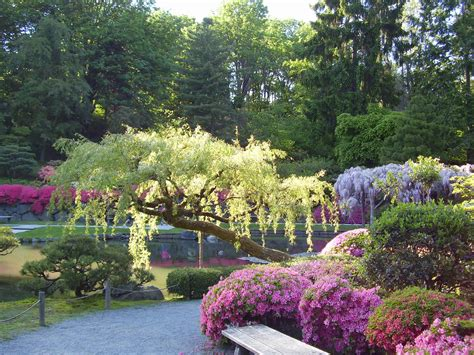Flower Garden Japan Japanese Gardens Bench Seat Flowers Japanese Garden Pond Wisteria 47913
