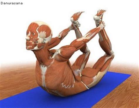 libros cadenas musculares gratis im 225 genes m 250 sculo esqueleto