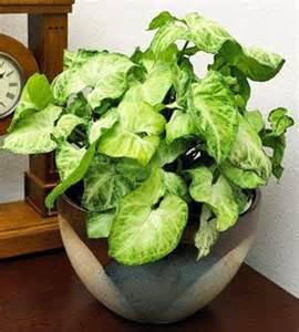 Foliage House Plant Identification - foliage plants plants and house plants on pinterest