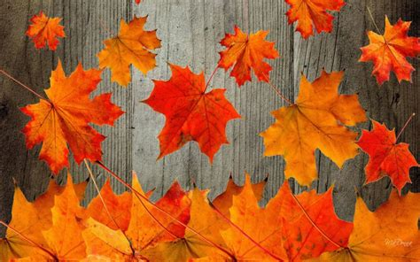hd rustic autumn wallpaper