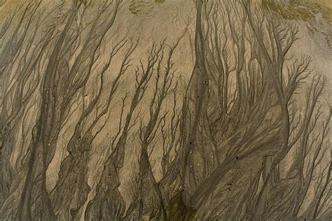 sand pattern artist sand patterns branching out photograph by todd breitling