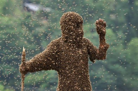 Bee Sweepstakes - bee bearding contest in china damn cool pictures