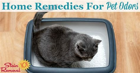 home remedies  pet odors  rid   smell
