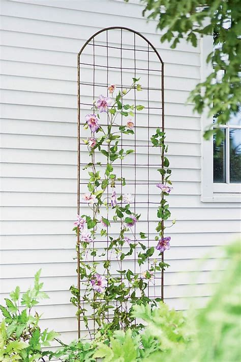 White Metal Garden Trellis 25 Best Ideas About Metal Trellis On Metal