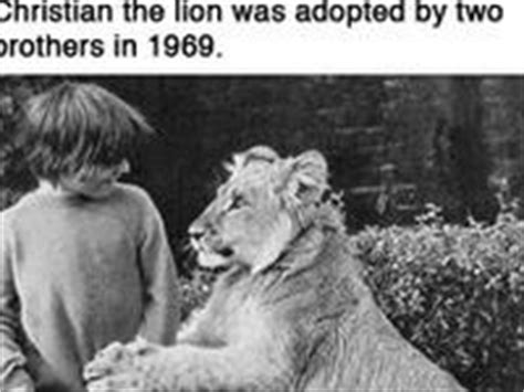 film about lion from harrods 22 best images about christian the lion cub from harrods
