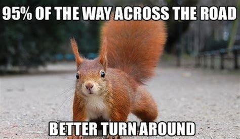 Squirrel Meme - site unavailable