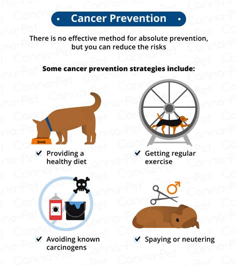 symptoms of cancer in dogs cancer in dogs causes symptoms treatments canna pet