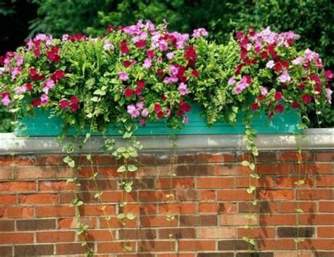 Flowers For Planter Boxes In Sun by 28 Best Deer Fence Images On Deer Fence
