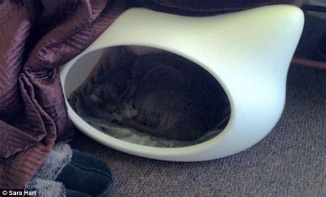 Karpet Bulu Putih Uk 100x130 photo kamuflase kucing ajaib sungguh kreatif