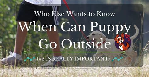 when can a puppy go outside who else wants to when can puppy go outside 2 is really important
