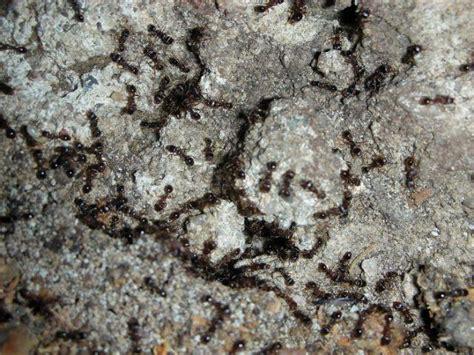 tuin een grote mieren nest mieren zitten overal rondom ons in de tuin in het wild