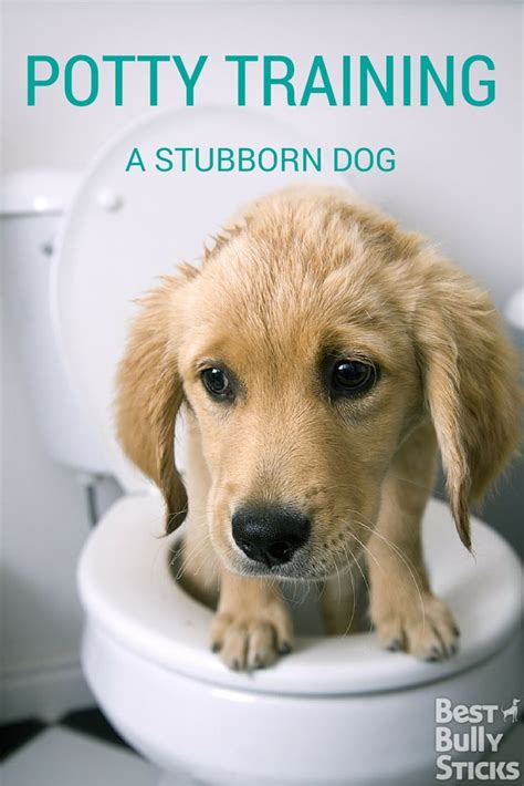 how to potty a stubborn puppy 1000 ideas about potty seats on potty toddler potty