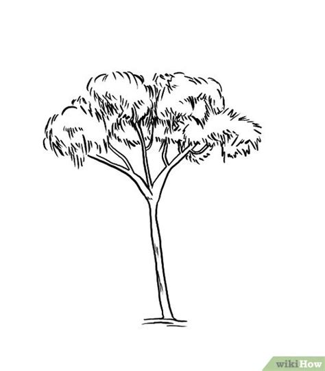 rubber tree coloring page how to draw a gum tree 8 steps with pictures wikihow