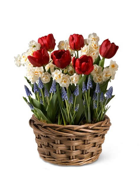 monthly flower delivery  months  blooms gardeners
