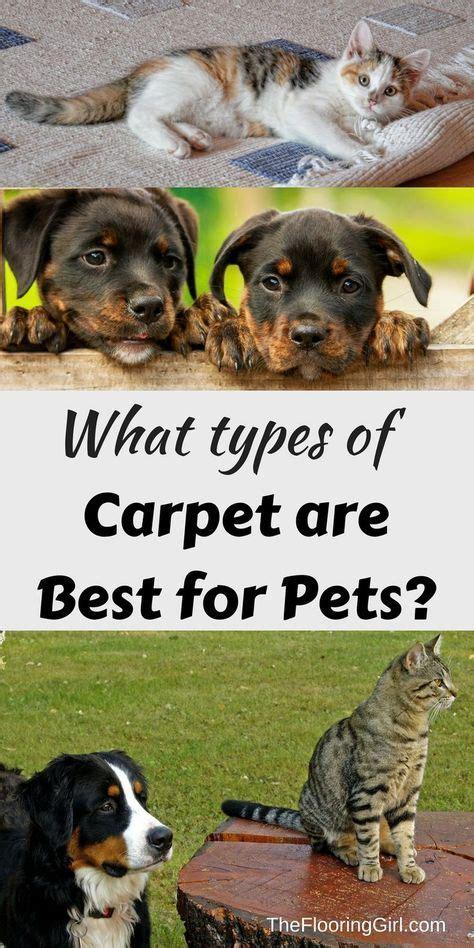 best carpet for pets best 25 types of carpet ideas on carpet types types of rugs and rugs on carpet