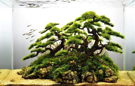 java moss aquascape java moss tree in fish tank awesome sash pinterest