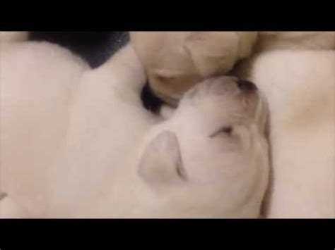puppy lullaby toddler sings lullaby to put puppy to sleep doovi