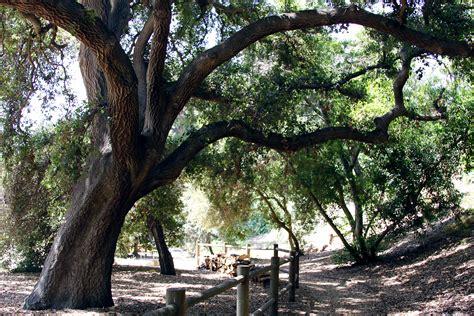 Rancho Santa Ana Botanic Garden Photographyfree4all S Blog Rancho Santa Botanical Gardens
