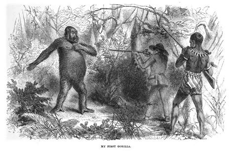 bigfoot west coast a history of gorillas and other monsters in california oregon and washington state books learn more at upload wikimedia org