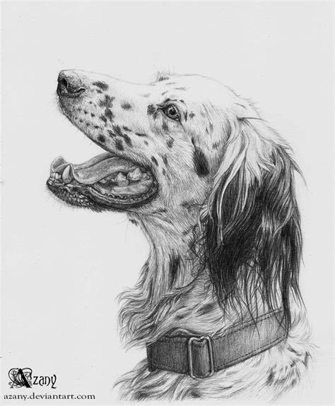 setter dog drawing english setter by azany on deviantart