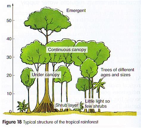 rainforest diagram tropical rainforest diagram search results calendar 2015