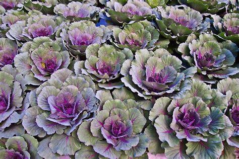 piante fioriscono in inverno 9 piante fioriscono in inverno amicopolis social network