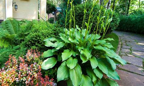 ideas  beautiful garden design  yard landscaping