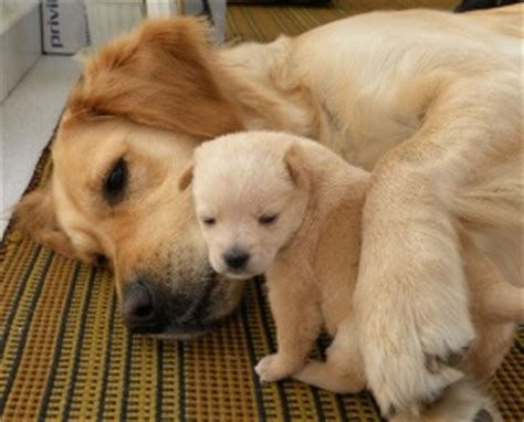 affectionate dogs which small breed dogs are the most docile breeds picture