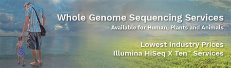 illumina sequencing service whole genome sequencing services novogene