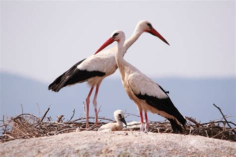 Mixed Patterns by Storks Change Migration Patterns To Eat Trash Mnn