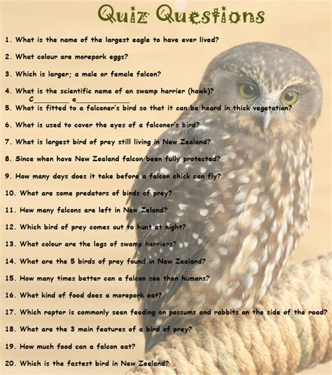printable bird quiz wingspan national bird of prey centre kids activities
