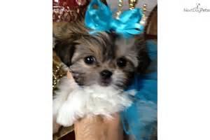 Puppy for sale near dallas fort worth texas 6490e263 5891