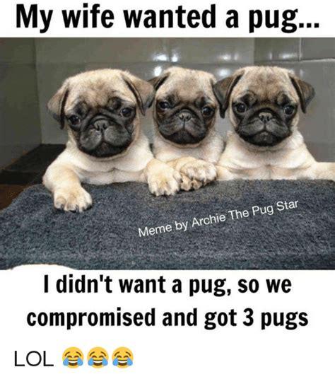 pug memes pug memes 30 pug memes andym pug