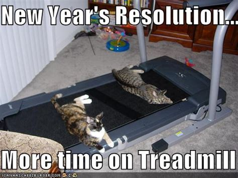 Happy New Year Cat Meme - random thoughts of a disordered mind life is more than