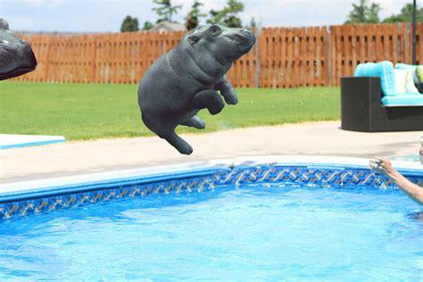 Baby Wear Hippo Swim psbattle baby hippo getting pushed photoshopbattles