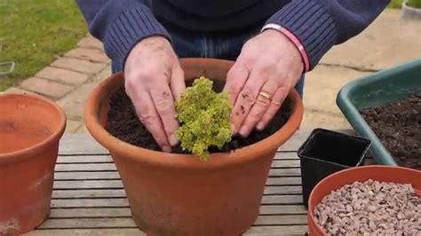 Herb Planters Uk by How To Pot A Herb Planter Richard Jackson S Garden