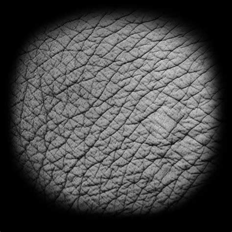 zbrush elephant tutorial photo skin jpg tutorial 3d pinterest zbrush and 3d